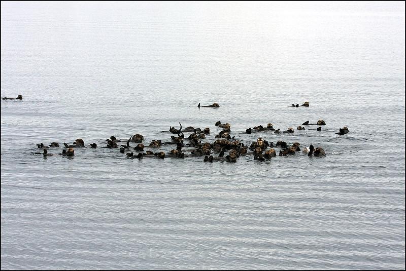 Alaska-Sitka(edit)_0101