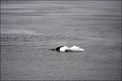 Alaska-GlacierBay(edit)_0027