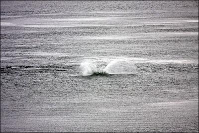 Alaska-GlacierBay(edit)_0026