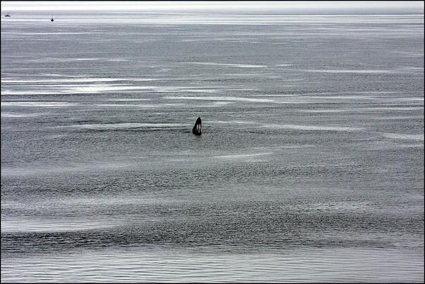 Alaska-GlacierBay(edit)_0021