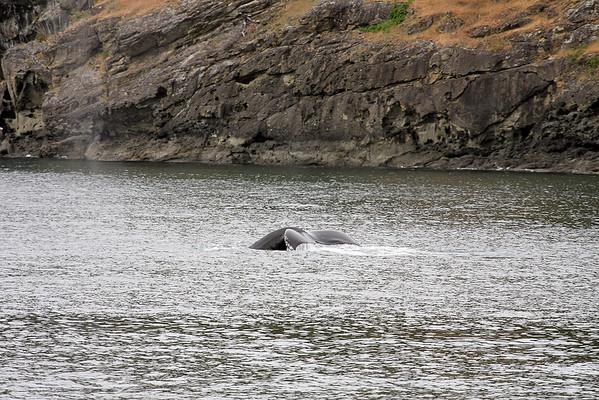 WhaleWatching0510(edit)_0063