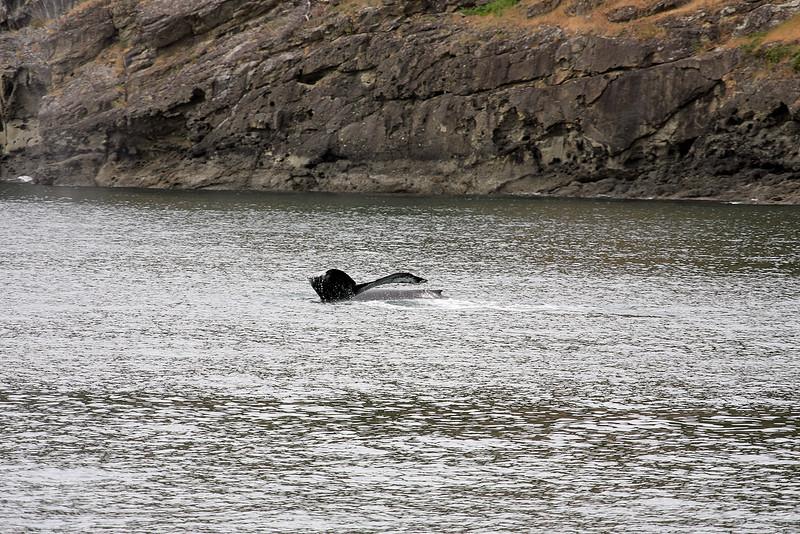 WhaleWatching0510(edit)_0065