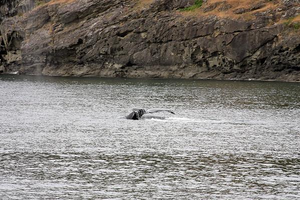 WhaleWatching0510(edit)_0064