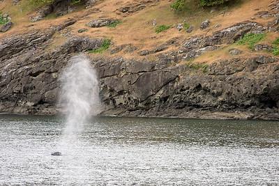 WhaleWatching0510(edit)_0055