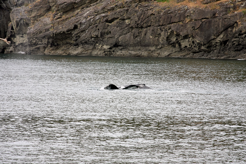 WhaleWatching0510(edit)_0066