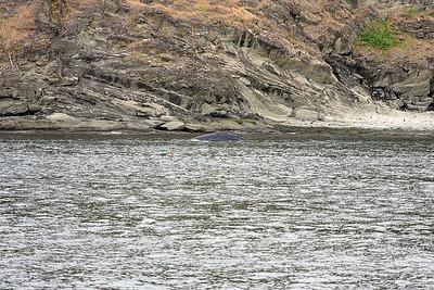 WhaleWatching0510(edit)_0043
