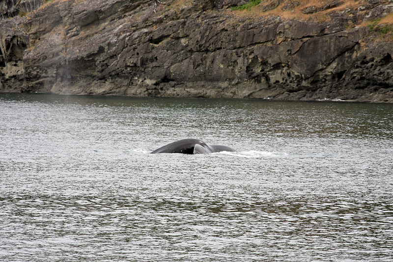 WhaleWatching0510(edit)_0062