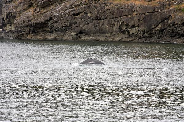 WhaleWatching0510(edit)_0068