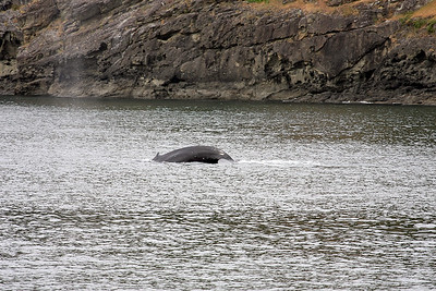 WhaleWatching0510(edit)_0061