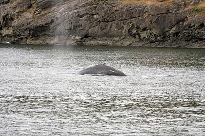 WhaleWatching0510(edit)_0058