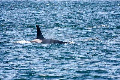WhaleWatching0811(edit)_0079