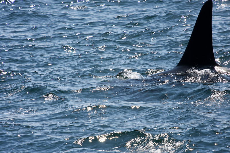 WhaleWatching0811(edit)_0132