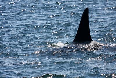 WhaleWatching0811(edit)_0133