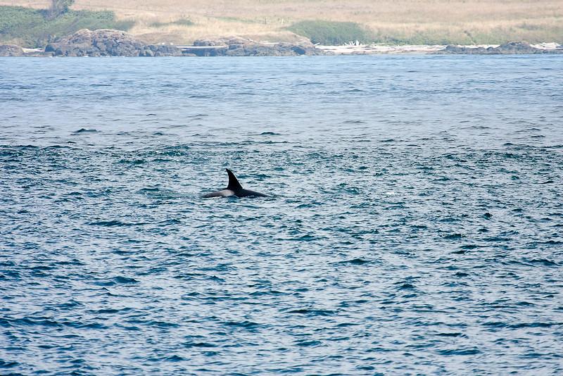WhaleWatching0811(edit)_0020