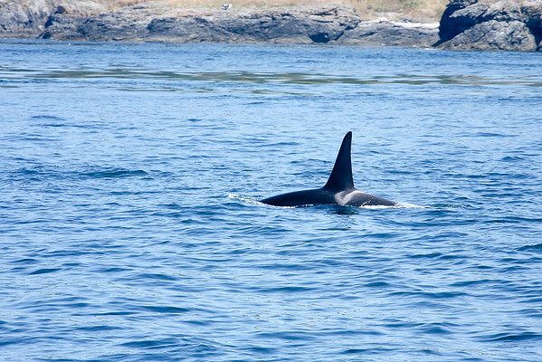 WhaleWatching0811(edit)_0102