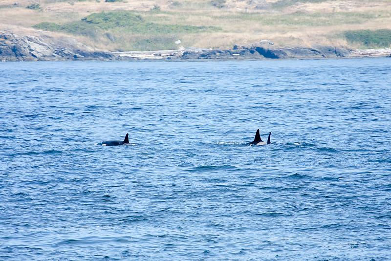 WhaleWatching0811(edit)_0048