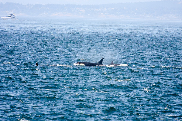WhaleWatching0811(edit)_0128