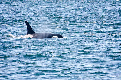 WhaleWatching0811(edit)_0077