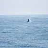 WhaleWatching0811(edit)_0209