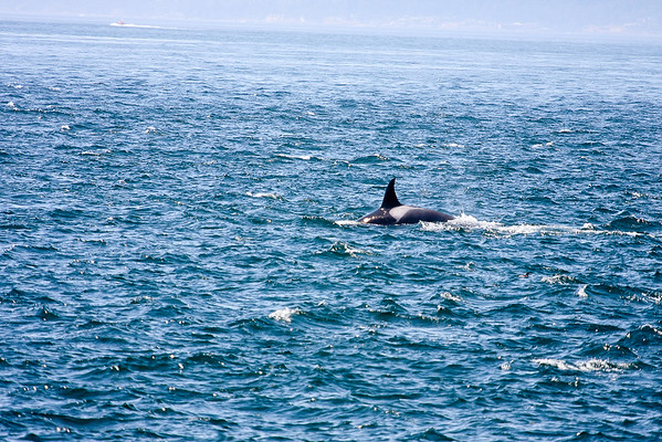 WhaleWatching0811(edit)_0141