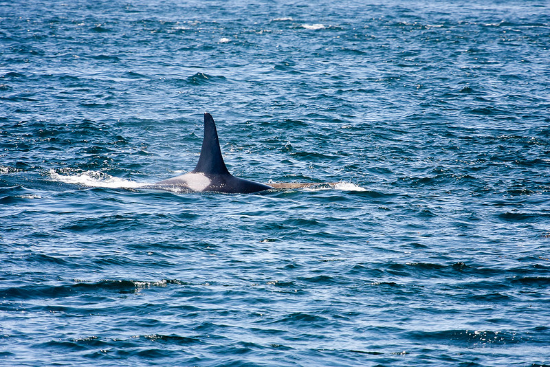 WhaleWatching0811(edit)_0075