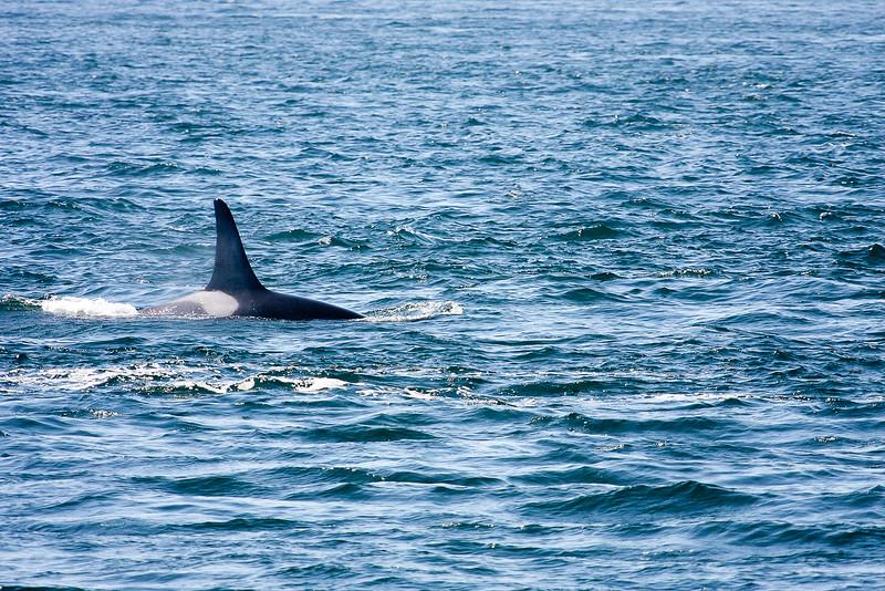 WhaleWatching0811(edit)_0072