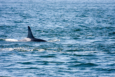 WhaleWatching0811(edit)_0072