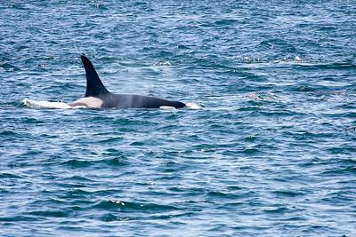 WhaleWatching0811(edit)_0078