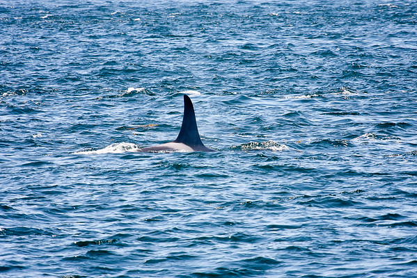 WhaleWatching0811(edit)_0080