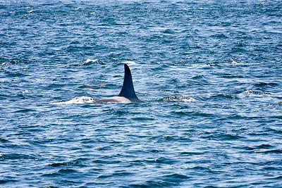 WhaleWatching0811(edit)_0080