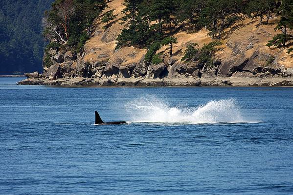 WhaleWatching0713(orig)_0094