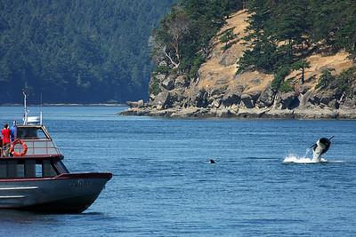 WhaleWatching0713(orig)_0090