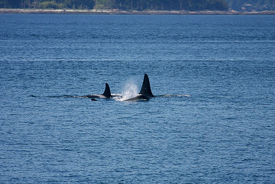 WhaleWatching0713(orig)_0131