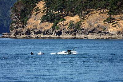 WhaleWatching0713(orig)_0092