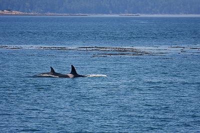 WhaleWatching0713(orig)_0124