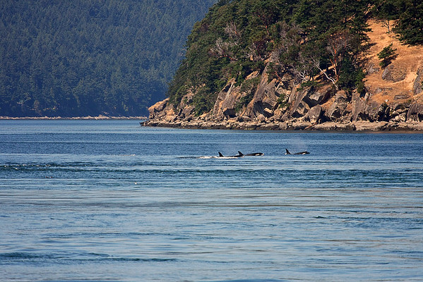 WhaleWatching0713(orig)_0039