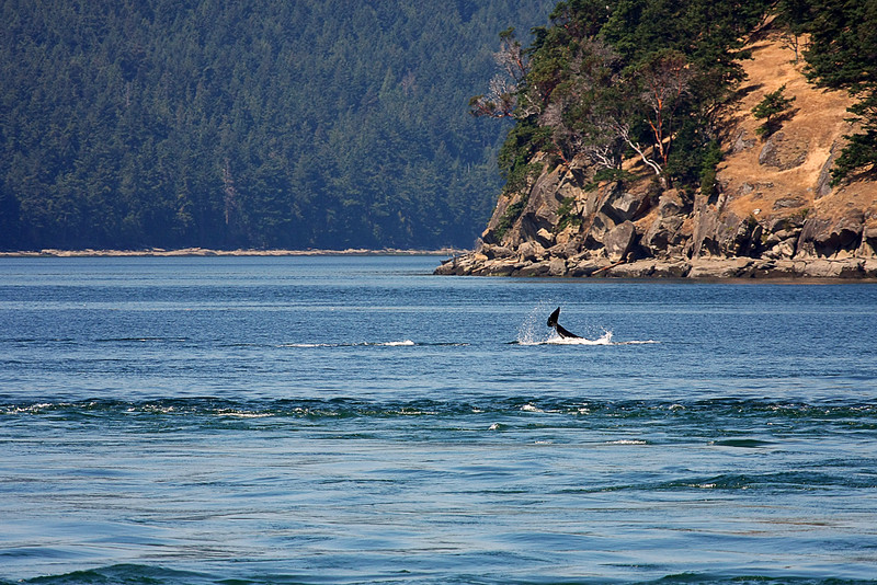 WhaleWatching0713(orig)_0074
