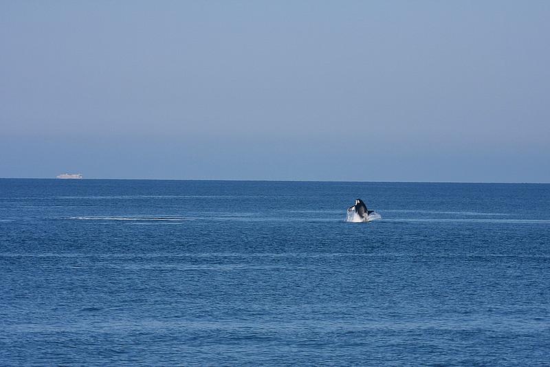 WhaleWatching0713(orig)_0172