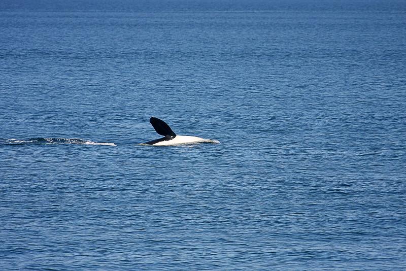 WhaleWatching0713(orig)_0158