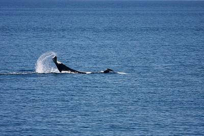 WhaleWatching0713(orig)_0150
