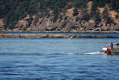 WhaleWatching0713(orig)_0019