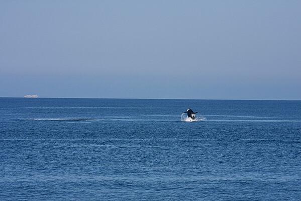 WhaleWatching0713(orig)_0173