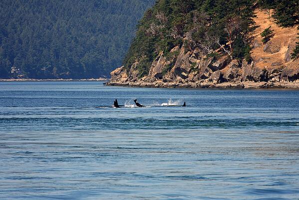 WhaleWatching0713(orig)_0049