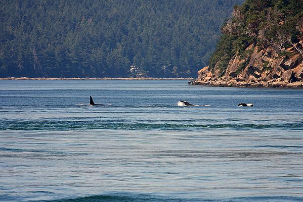 WhaleWatching0713(orig)_0054