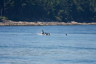 WhaleWatching0713(orig)_0122
