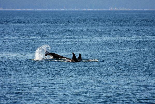 WhaleWatching0713(orig)_0129