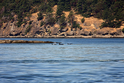 WhaleWatching0713(orig)_0026