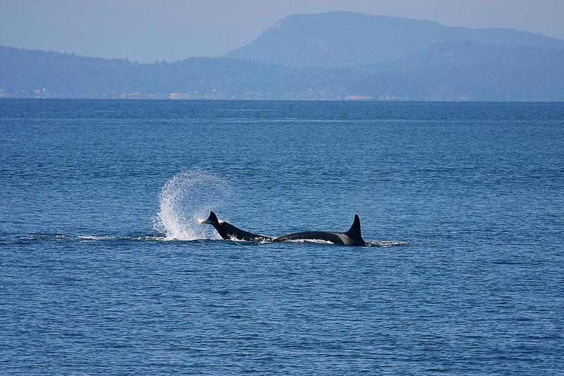 WhaleWatching0713(orig)_0136