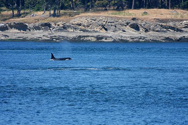 WhaleWatching0713(orig)_0107