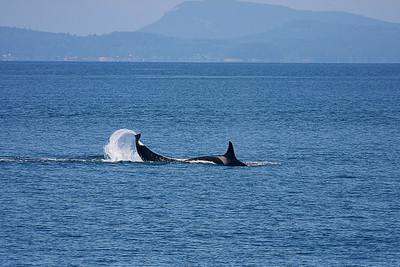 WhaleWatching0713(orig)_0135